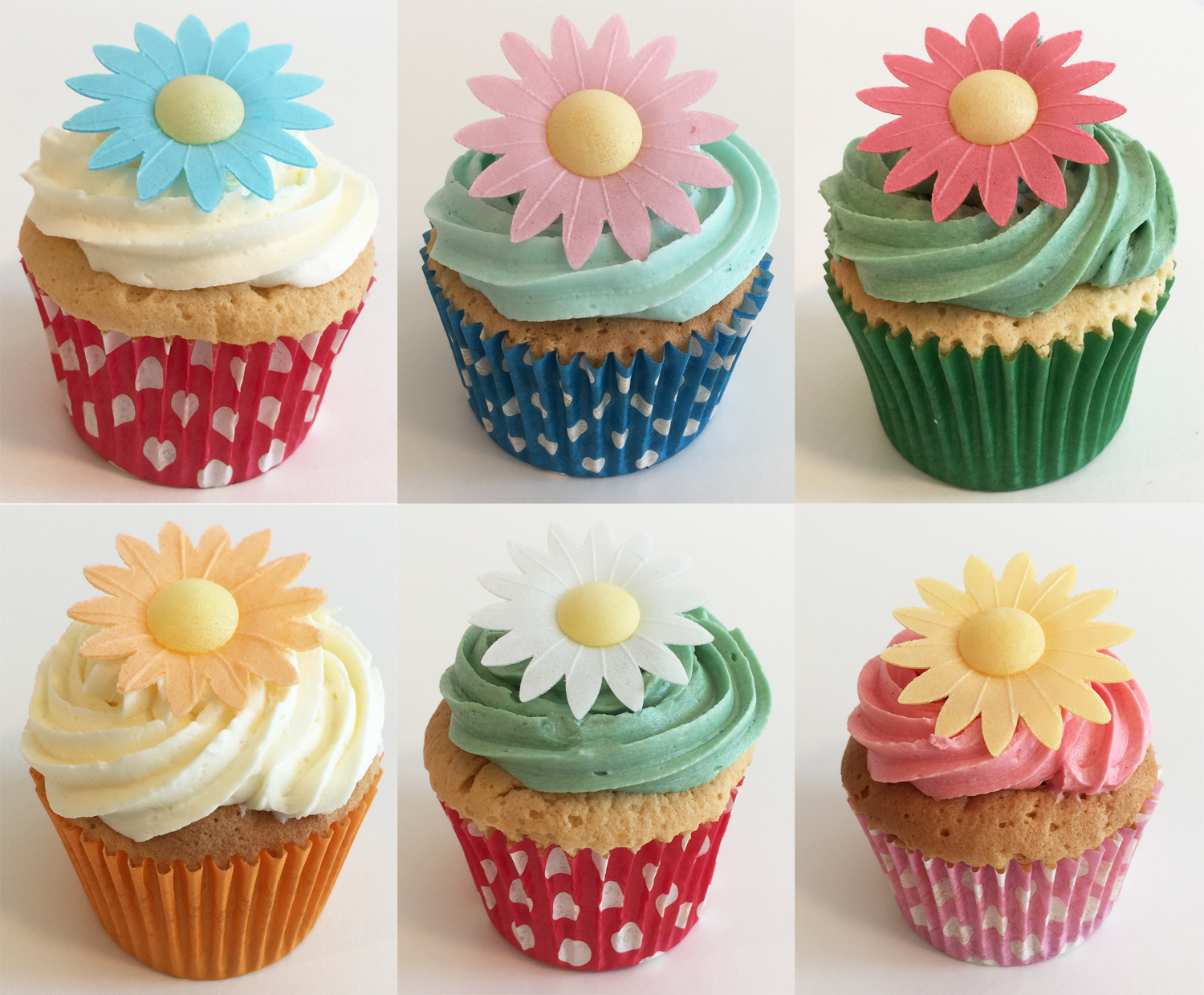 12 Gorgeous Mixed Colour Daisies Holly Cupcakes